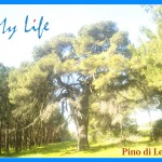 pino di lenne palagiano mylife
